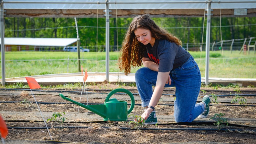 CALS Agroecology student Eliza Hardy waters plants