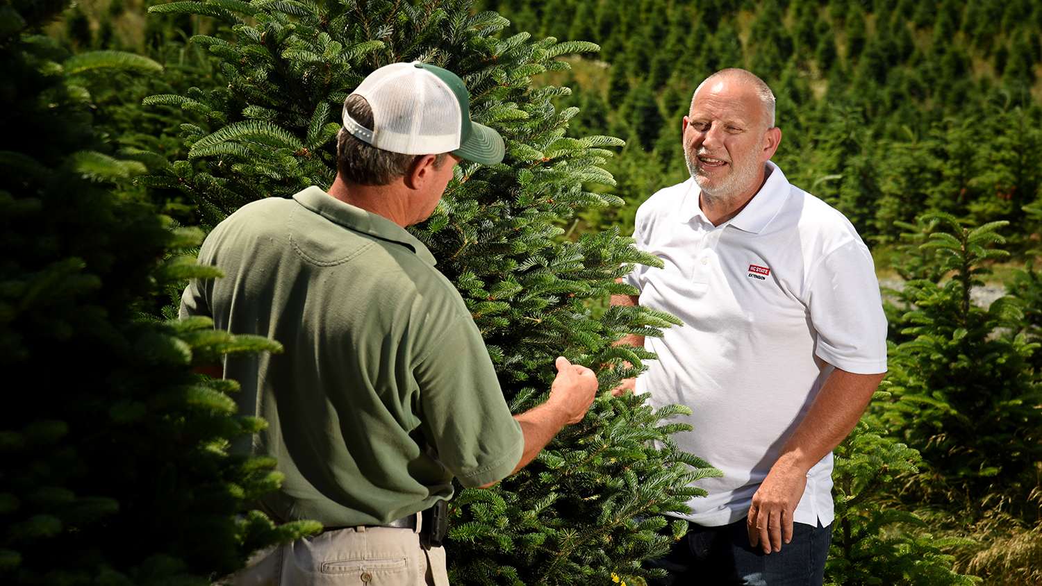 Two people working and talking on Christmas tree farm
