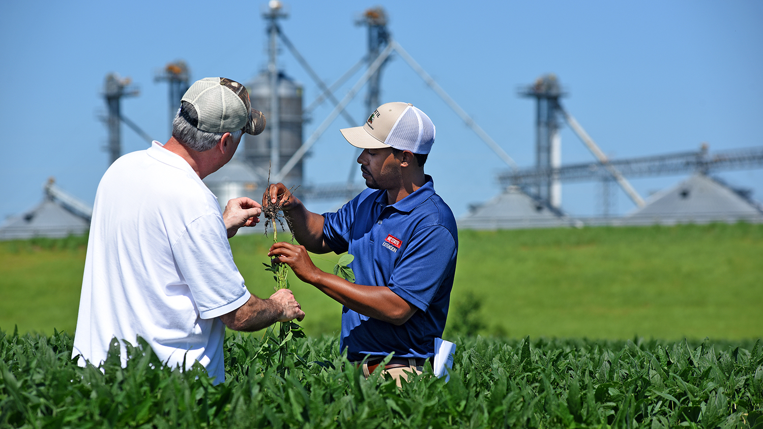 Agent and farmer in a field looking at soybean plants