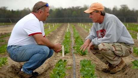 Two farmers squat in a field