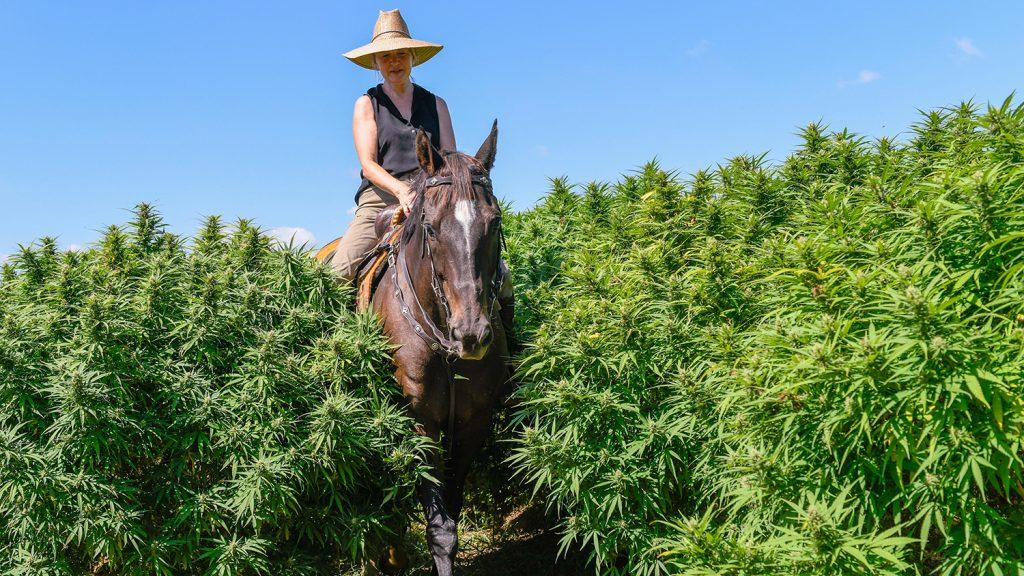 Woman on horseback surrounded by hemp plants