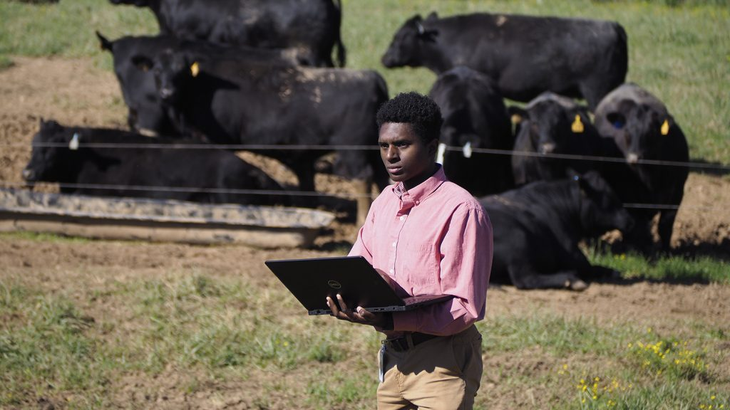 Young man with a laptop computer; cows in the background