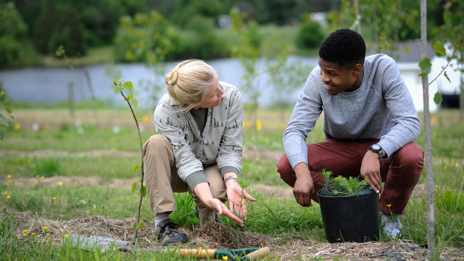 Two people planting a plant in the ground