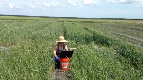 Woman in big sun hat kneeling in field of green, knee-high wheat.