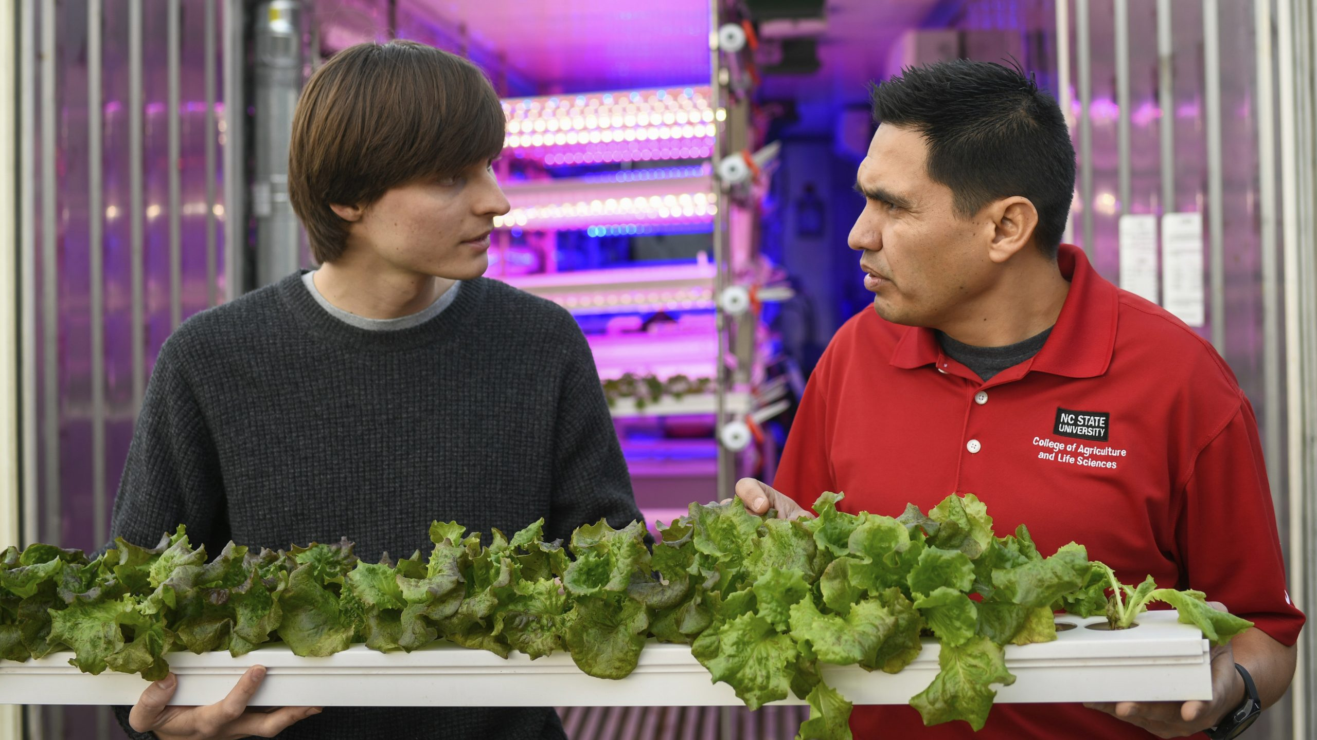 Two men holding a tray of lettuce in front of a shipping container farm lit in purple
