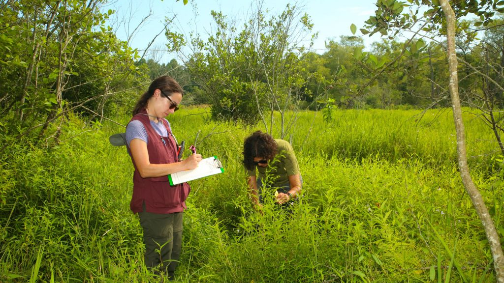 Two women working and doing fieldwork in a field
